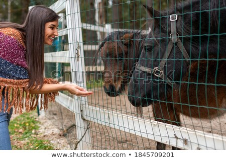 Woman holding the cage and the horse Stock photo © konradbak