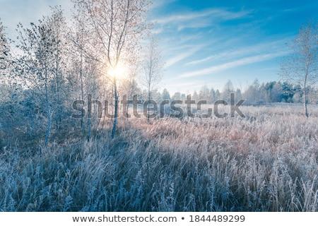 Reggel fagy fák mező sötét erdő Stock fotó © olandsfokus