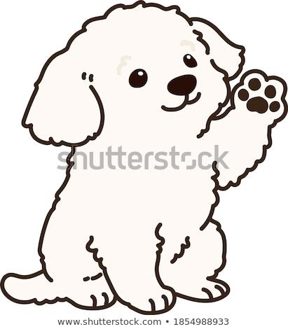 aranyos · kutyakölyök · sétapálca · fehér · fotó · stúdió - stock fotó © kokimk