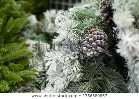 Snow-covered pines Stock photo © Makse