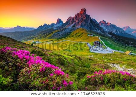 Virágok csúcs égbolt fű tájkép hegy Stock fotó © Antonio-S