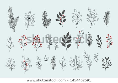 Winter branch Stock photo © simply