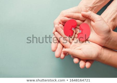 Kidneys background Stock photo © Tefi