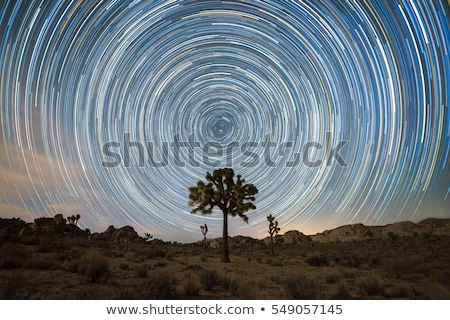 Long Exposure Star Trails In Joshua Tree National Park Stock photo © tobkatrina