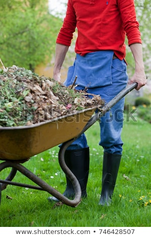 Man voortvarend kruiwagen plant asian tuinman Stockfoto © RAStudio