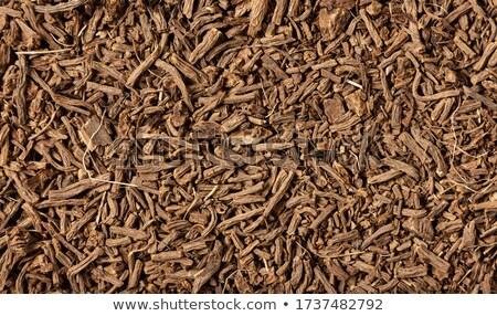 Dry Root Stock photo © papa1266