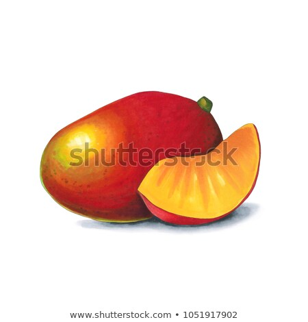 mango on a white background sketch done in alcohol markets stock photo © user_10003441