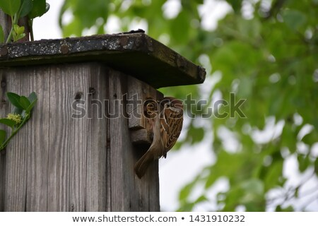 Woodpecker standing on birdhouse Stock photo © colematt