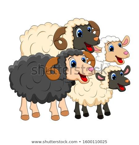 Baran owiec grupy cartoon ilustracja Zdjęcia stock © izakowski