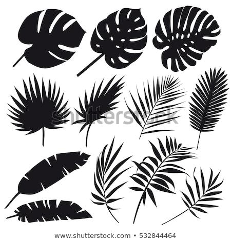 Tropicales plantas hojas siluetas establecer vector Foto stock © Margolana