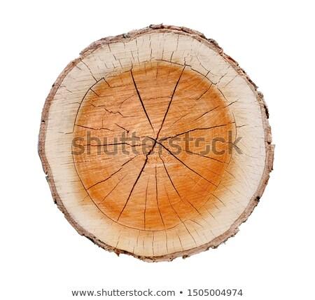 Scheuren boomstam aderen hout boom plant Stockfoto © AlessandroZocc