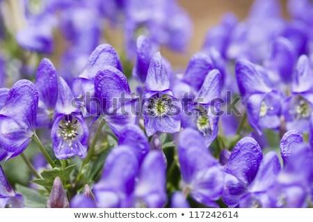 Bloemen voorjaar natuur zomer tuinieren macro Stockfoto © AlessandroZocc