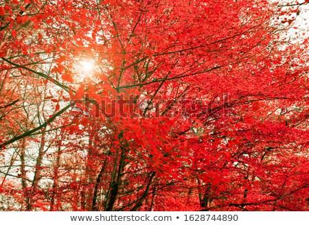 colorful treetops stock photo © prill