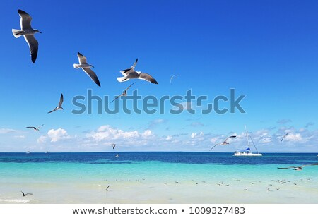seagulls flying in the blue sky at the ocean  Stock photo © meinzahn