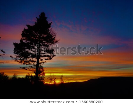 pine tree against mountain view stock photo © nejron
