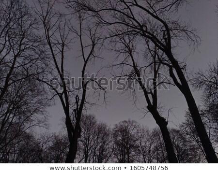 Fekete kék tél égbolt ágak fa Stock fotó © ultrapro