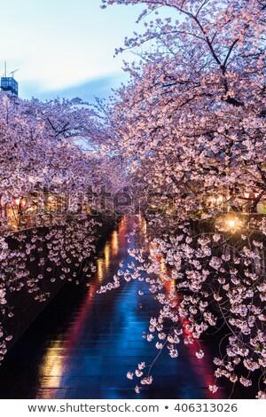 Сток-фото: Blossom · дерево · синий · воды · побережье · острове