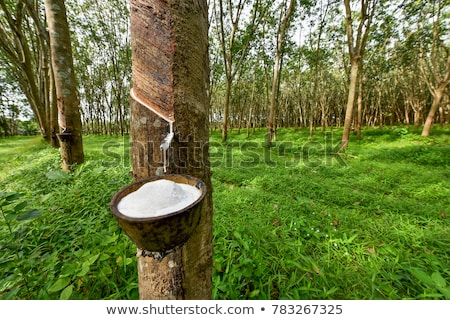 Rubber tree latex agriculture in tropical forest and bowl Stock photo © FrameAngel