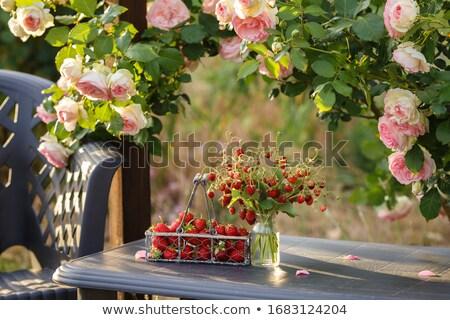 çilek sepet güller bahçe asılı çilek Stok fotoğraf © stickasa