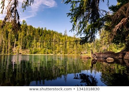 Mountain lake in Sumava Stock photo © ondrej83