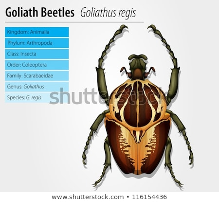 Gothiath beetle Stock photo © bluering