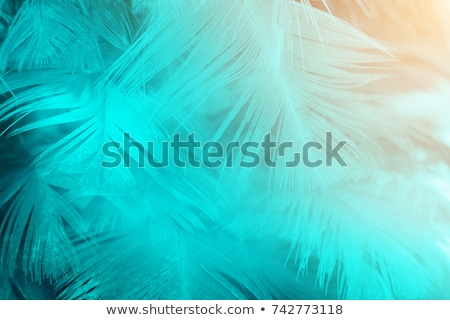 A soft feathered texture Stock photo © bluering