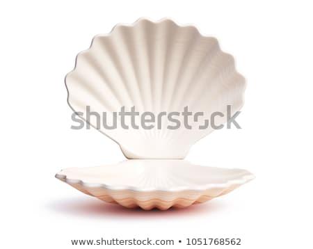 Open shell creatieve stilleven foto ei Stockfoto © Fisher