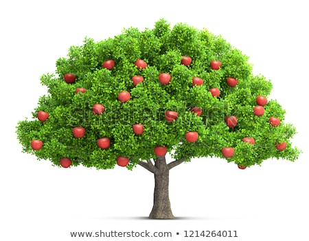 Red Apple Tree Stock photo © FOTOYOU