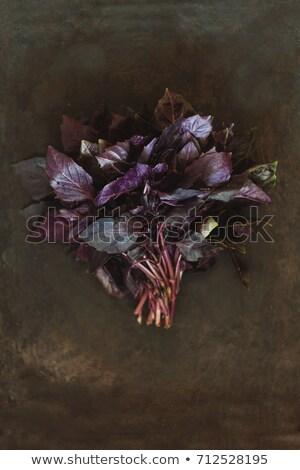 top · view · fresche · verde · basilico · foglie - foto d'archivio © tanach