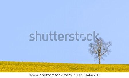 ツリー · 曇った · 空 · 草 - ストックフォト © rtimages