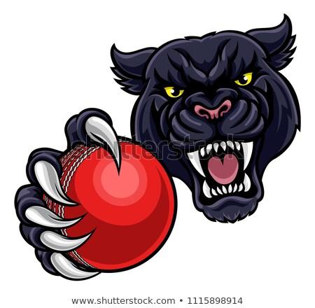 black panther holding cricket ball mascot stock photo © krisdog