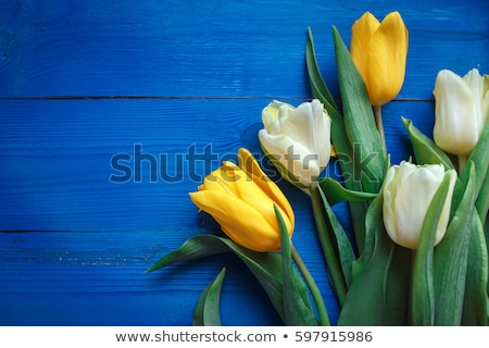 Row of fresh Yellow tulips on white wooden table Stock photo © dash