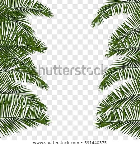 Hello nyár kártya trópusi pálmafa levelek Stock fotó © cienpies