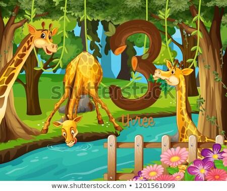 Três girafa água ilustração árvore arte Foto stock © colematt