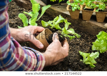Farming Person Cultivating Soil, Gardening Man Stock photo © robuart