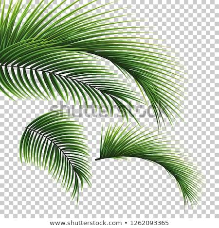 Trópusi virágok pálmalevél izolált átlátszó gradiens Stock fotó © barbaliss