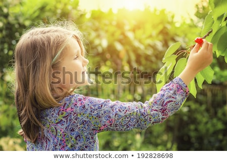 Cute Girl Picking Cherries Stock photo © AndreyPopov