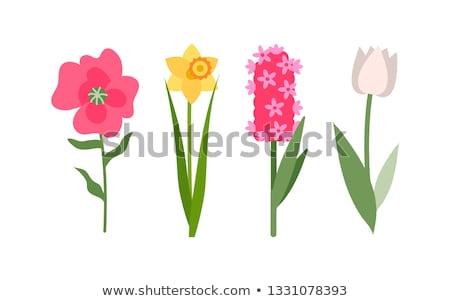 Abrótea flor verde estável amarelo Foto stock © robuart