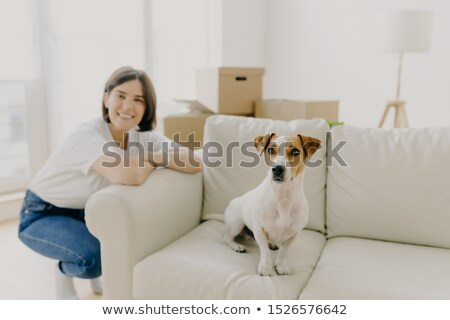 Happy woman plays with favourite pet, poses near sofa in new apartment, celebrate Moving Day, bought Stock photo © vkstudio