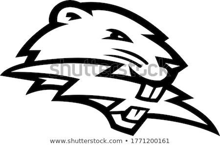 North American Beaver Biting Lightning Bolt Mascot Black and White Stock photo © patrimonio