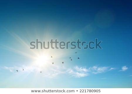 Flying Bird in Blue Sky Stock photo © grivet