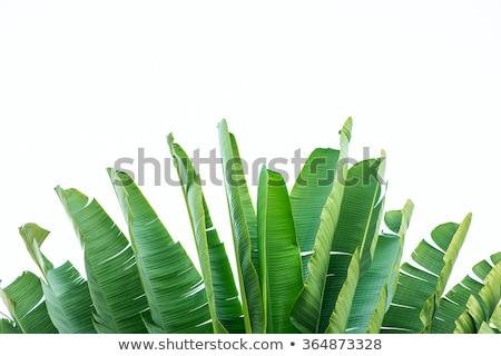 Banaan witte textuur boom voedsel abstract Stockfoto © wavebreak_media