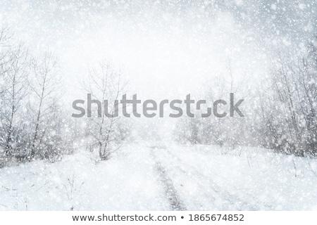 Winter Blizzard Stock photo © markhayes