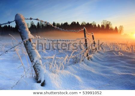 branco · cerca · manhã · sol · pássaro - foto stock © bumerizz
