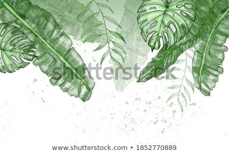 緑 手のひら 工場 葉 クローズアップ 赤 ストックフォト © stocker