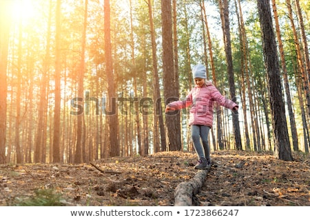 Timber logs and sunny spring forest Stock photo © tainasohlman