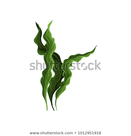 Wodorost szczegół świeże zielone kamień Zdjęcia stock © prill
