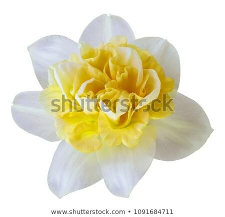 Frau Frühling gelbe Blume Blume Mädchen glücklich Stock foto © CandyboxPhoto