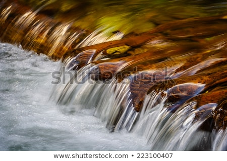 água enseada primavera verão verde Foto stock © Kayco