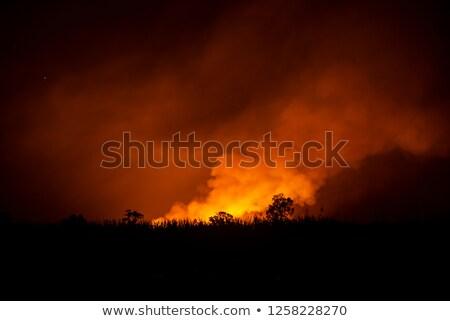 Sugarcane field fired Stock photo © rufous
